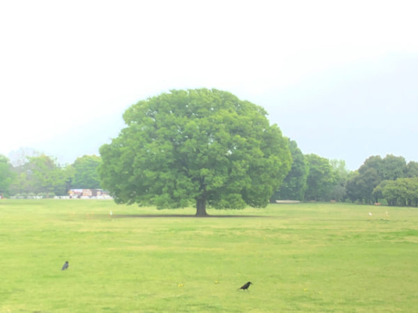 GW期間もそれ以外の日も!昭和記念公園での色々な楽しみ方